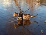 Benny paddling