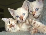 Penny, Malibu and Mocha
